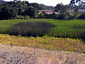 Retention basin for fire cache 2012-08.jpg