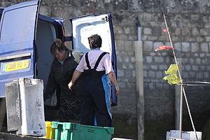 Retour de la pêche à la seiche du fileyeur Jason IV (58).JPG