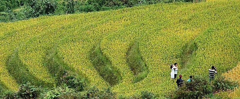 Tập tin:RiceTerrace.jpg