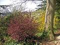 Richmond 018 Terrace Gardens in May.JPG