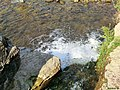 River - panoramio (75).jpg