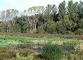 River Sow Flood Plain, Milford, Staffordshire - geograph.org.uk - 592140.jpg