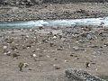 River of Balakot.jpg