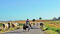 Road to Village Hocalı - Hocalı Köyü Yolu 05.jpg