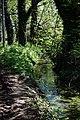 Roadside stream in Great Canfield, Essex, England.jpg