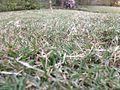 Rough grass.jpg