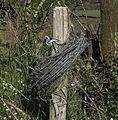 Rouleau de fil de fer barbelé au bord d'un champ.jpg