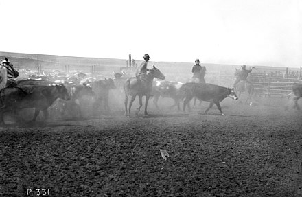 Rounding up cattle for the first Calgary Stampede in 1912. The Stampede is one of the world's largest rodeos. Rounding up for the first Calgary Stampede (38085634056).jpg