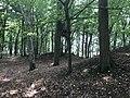 Rubkow Großsteingrab Kuhbergholz (6).jpg