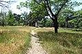 Rustavi - path.jpg
