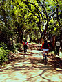 Ruta BiciTurismo Cochabamba-Apote.jpg