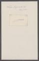 Salpa longicauda - - Print - Iconographia Zoologica - Special Collections University of Amsterdam - UBAINV0274 092 08 0058.tif