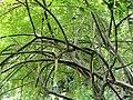 San Juan Botanical Garden - DSC07024.JPG