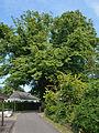 Schleswig-Holstein, Hohenlockstedt, Naturdenkmal NIK 6847.JPG