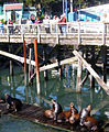 Sea-Lions-Newport-OR.jpg