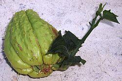 La Christophine dans Fruits & Légumes du Pays