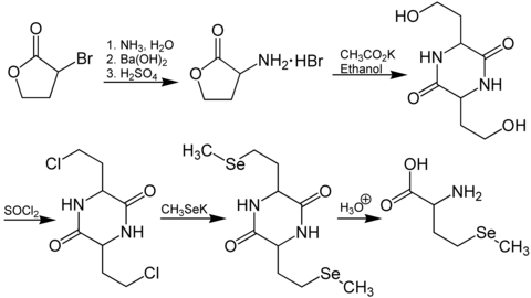 Synthese von (RS)-Selenomethionin.[2]