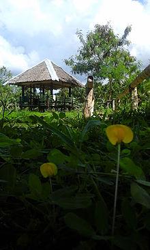 sogod southern leyte wikipedia