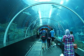 Shark Seas, S.E.A. Aquarium, Marine Life Park, Resorts World Sentosa, Singapore - 20130105-02.JPG