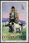 Shepherd-Dog-Canis-lupus-familiaris.jpg
