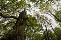 Sherwood Forest, May, 2017-2.jpg