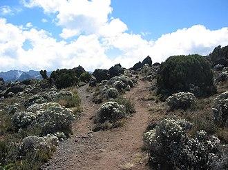 Moorland - Moorland of Kilimanjaro