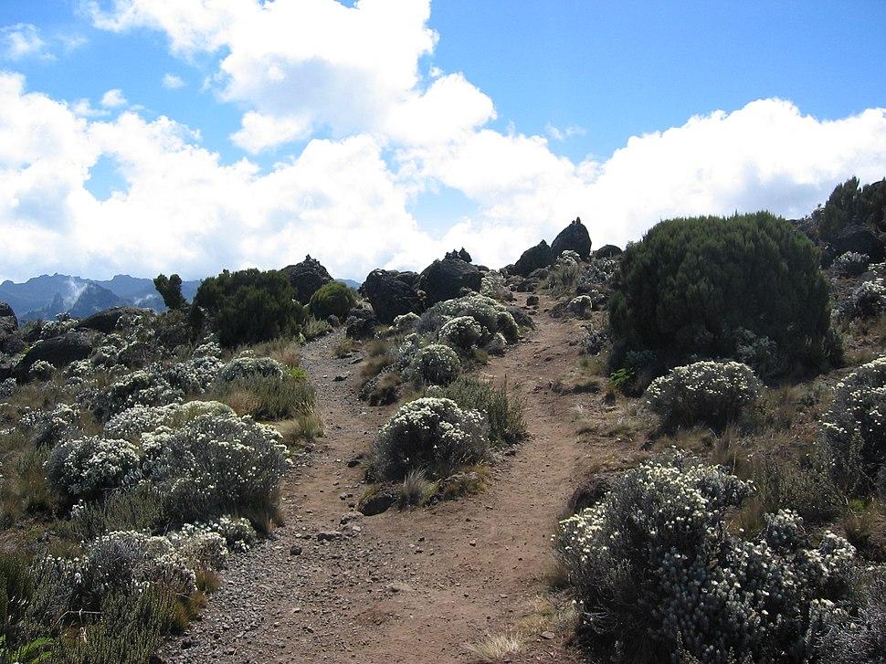 Shira moorlands on Kilimanjaro