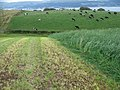 Silage, Great Cumbrae - geograph.org.uk - 550939.jpg