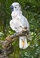Singapore - Jurong Bird Park-40and (4478189895).jpg