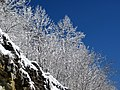 Snow from Winter Storm Skylar (12 March 2018) (near Frenchburg, Menifee County, Kentucky, USA) 11.jpg