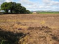 Soil preparation - geograph.org.uk - 991425.jpg