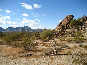 This is an image of the Sonoran Desert approx....