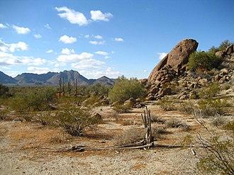 Geography of Arizona - Image: Sonoran Desert 33.081359 n 112.431507