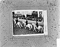 Spanische Reitschule in Wenen, Bestanddeelnr 921-8067.jpg