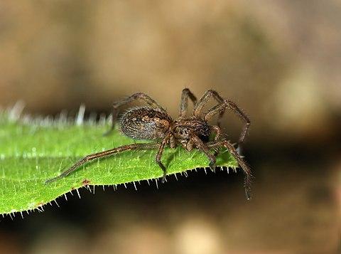 Spider April 2010-2a.jpg
