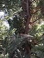 Spider web.sp.jpg