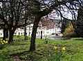 Spring flowers on the verge at Littledean - geograph.org.uk - 741191.jpg