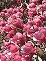 Spring in Bistrita (3642770529).jpg