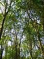 Spring woodland - geograph.org.uk - 408260.jpg