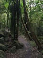 Springbrook National Park 04.JPG