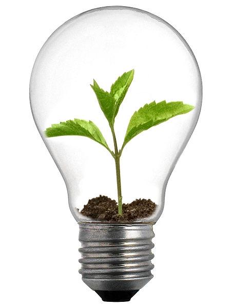 File:Sprout Lightbulb.jpg