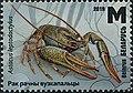 Stamp of Belarus - 2019 - Colnect 856967 - Narrow clawed Crayfish Astacus leptodactylus.jpeg