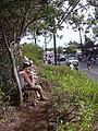 Starr-030705-0013-Schinus terebinthifolius-July 4 Parade-Makawao-Maui (24010159973).jpg
