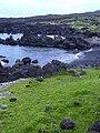 Starr 040331-0124 Jacquemontia ovalifolia subsp. sandwicensis.jpg