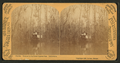 Steamer in the Great Cypress Pass, Oklawaha River, Fla, from Robert N. Dennis collection of stereoscopic views.png
