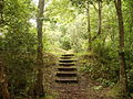 Steps in Windy Nook Nature Reserve.JPG