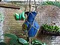 Still Life with Ceramics - Matagalpa - Nicaragua (31709411115).jpg