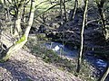 Stream at Rosebank - geograph.org.uk - 688551.jpg