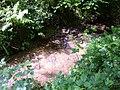 Stream in Dallington Forest - geograph.org.uk - 455731.jpg