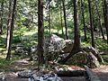 Strom vyrastajúci zo skaly - panoramio.jpg